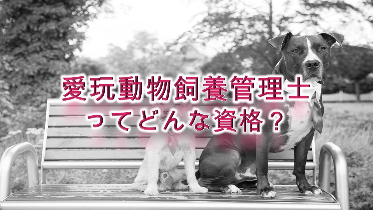 愛玩動物飼養管理士ってどんな資格?