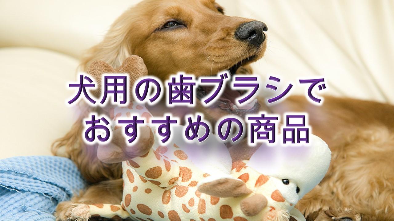 犬用の歯ブラシの選び方のポイントとは?【おすすめの犬用歯ブラシも紹介】