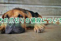 犬の爪切りの値段【動物病院とペットショップで、料金に違いある?】