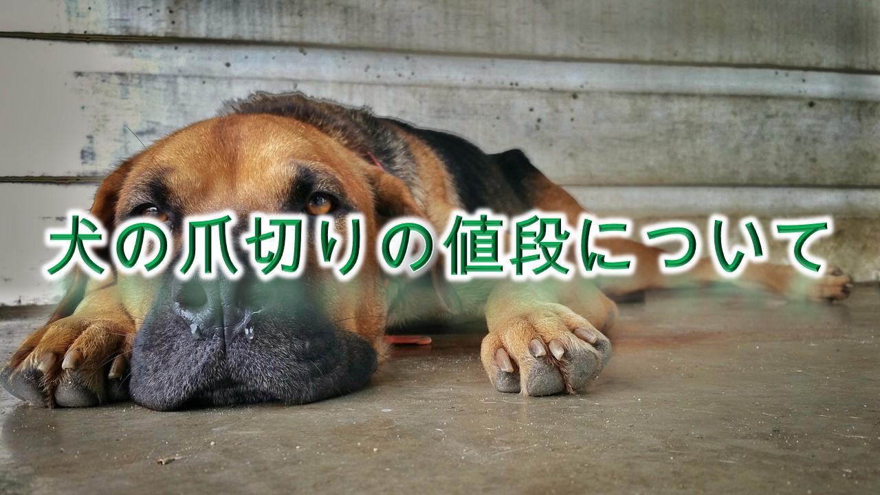 犬の爪切りの値段の相場【動物病院とペットショップで、料金に違いある?】