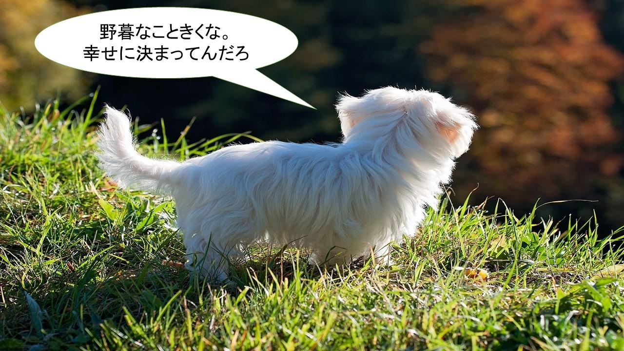ミックス犬「チワマル」ってどんな小型犬?【値段や性格、特徴をまとめました!】