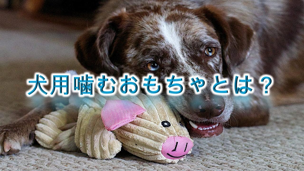犬用噛むおもちゃとは?【丈夫で安全なおすすめ商品を複数紹介】