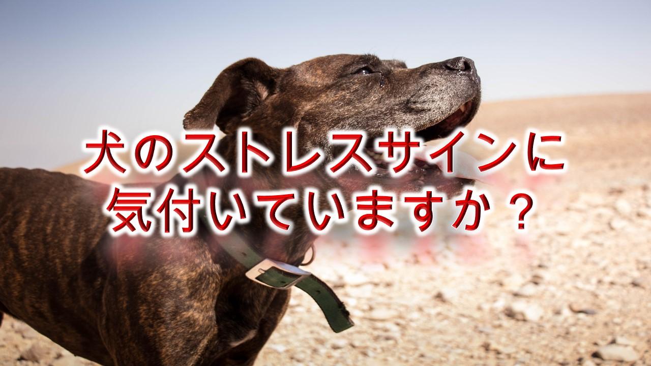 犬のストレスサインに気付いていますか?ストレスによる症状や行動を解説【下痢や嘔吐もストレスが原因かも!】