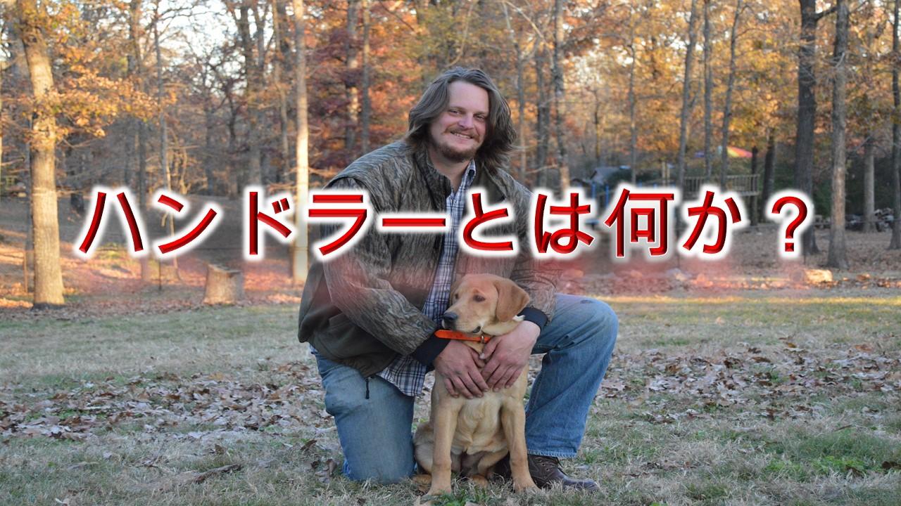 ハンドラーとは何か【犬の資格?ショーハンドラーについても解説】