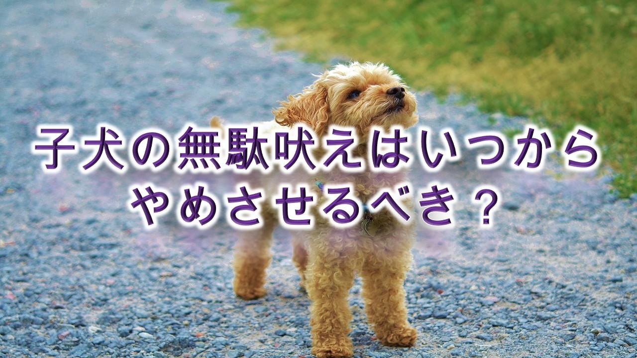 子犬の無駄吠えはいつからやめさせるべき?【無駄吠えを防止するためのしつけ方も紹介】