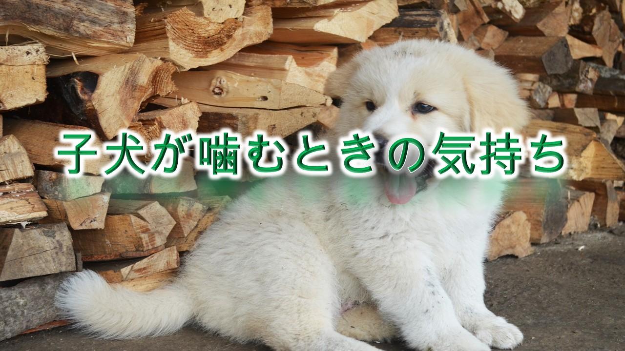 子犬が噛むときの気持ち(心理)【対処法も紹介】