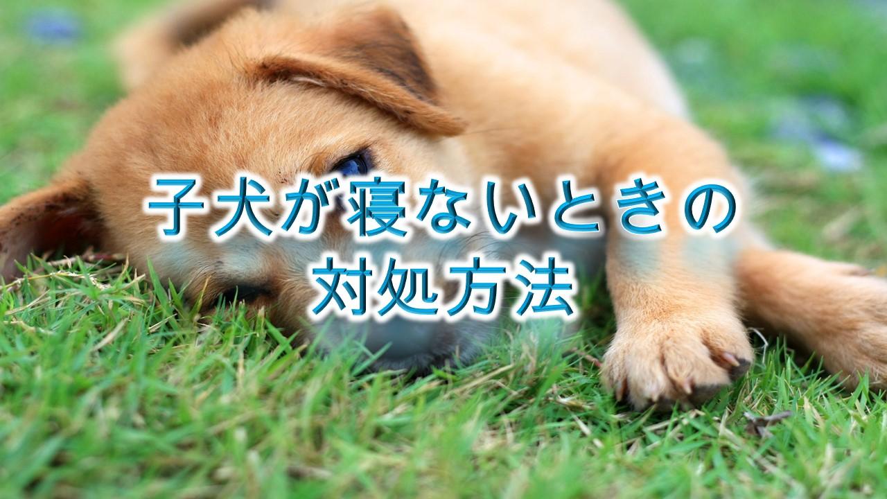 子犬が寝ないときの対処方法やしつけ方