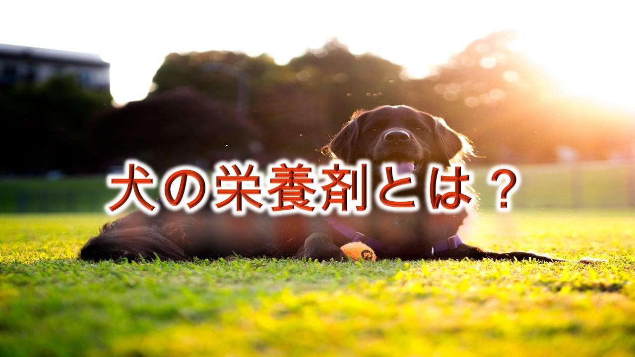 犬の栄養剤とは?【効果が期待できる栄養補給法も紹介!】