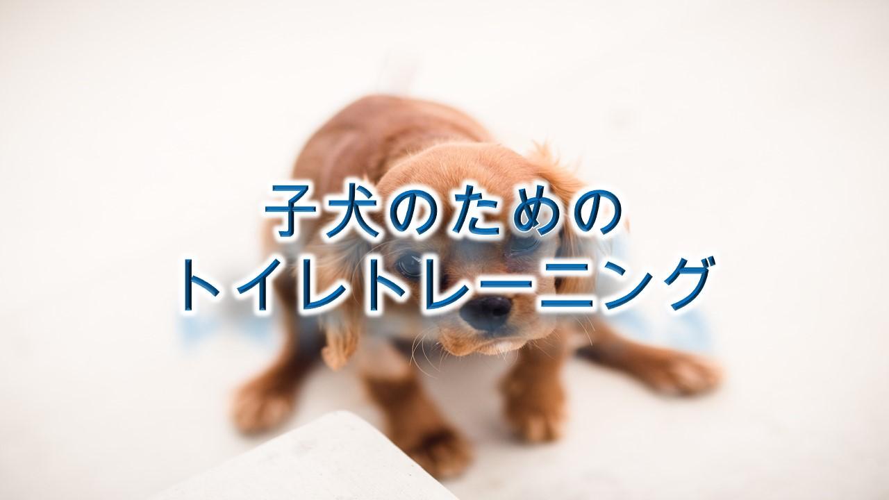子犬のためのトイレトレーニング【しつけ方やコツも紹介】