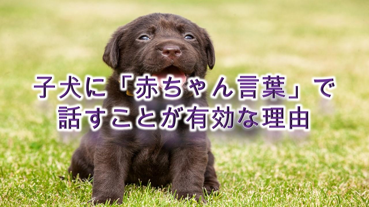 子犬に「赤ちゃん言葉」で話すことが有効な理由【コツも紹介】