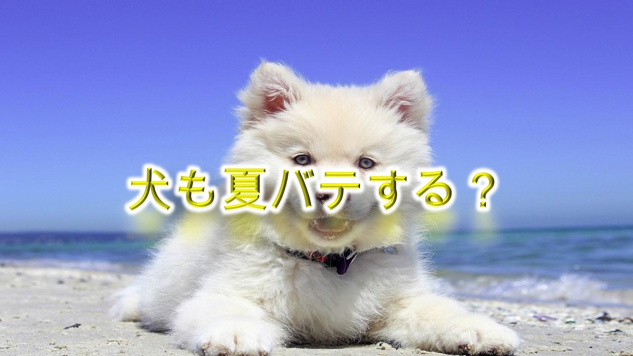 犬も夏バテする?【症状や夏バテ対策におすすめの食事やグッズも紹介】