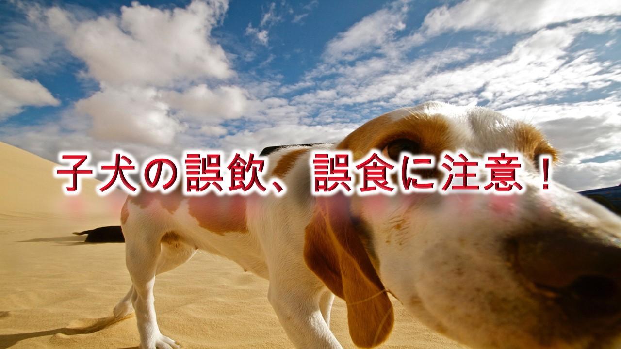 子犬の誤飲、誤食に注意!回避する方法やしつけ方などを解説
