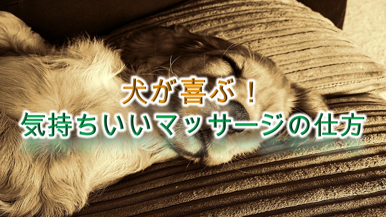 犬が喜ぶ!気持ちいいマッサージの仕方【ツボがある?犬が気持ちいいところはどこ?】