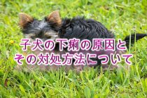 子犬の下痢の原因と、その対処方法について【子犬の命に関わるので要注意】