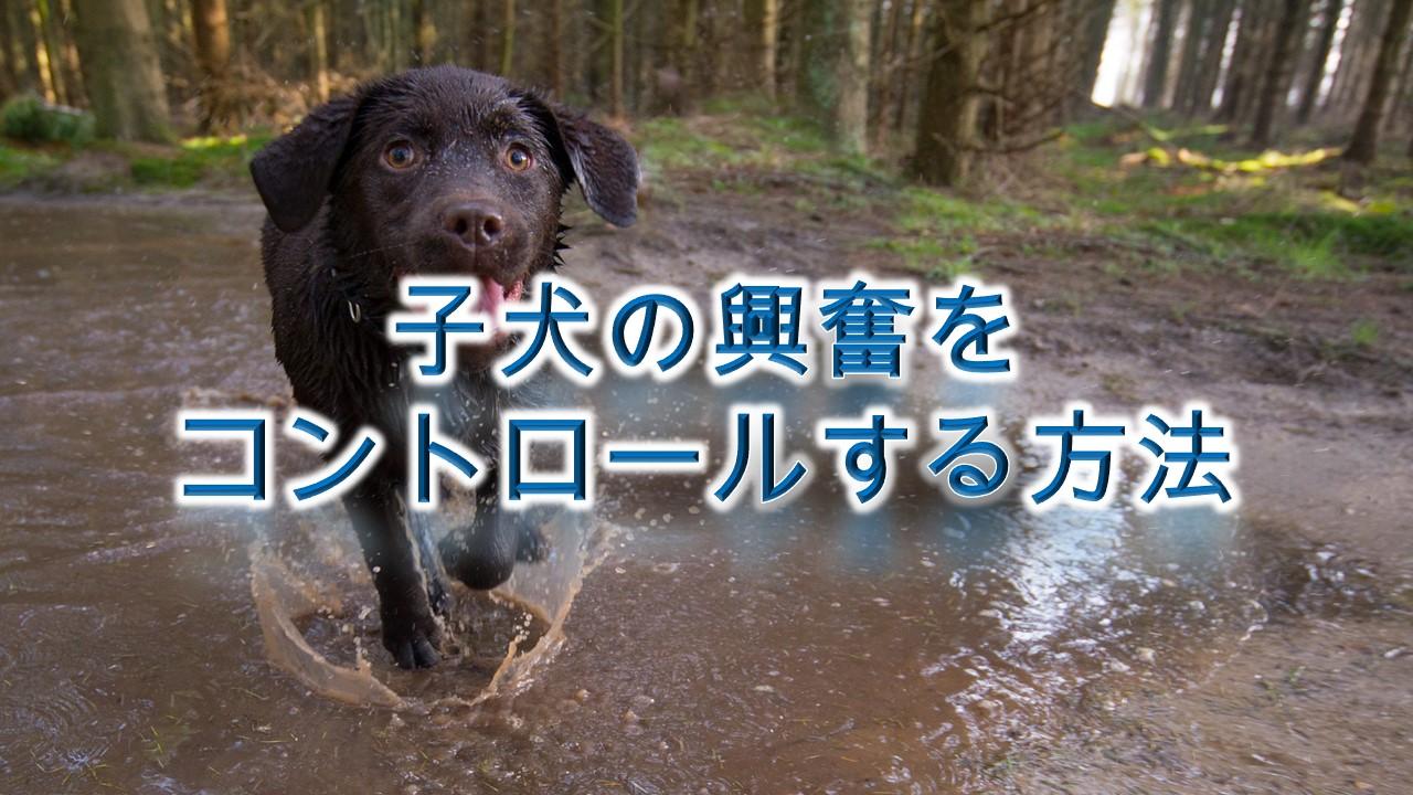 子犬の興奮をコントロールする方法【子犬のしつけ方】