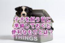 子犬を飼う前に準備しておくと便利なものとは?【子犬のための犬用グッズ】