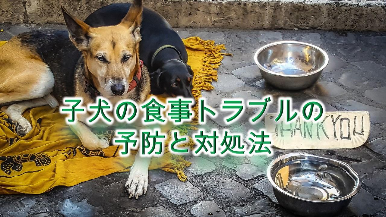 子犬の食事トラブルの予防と対処法【子犬に食べ物をあげる時のしつけ方など】