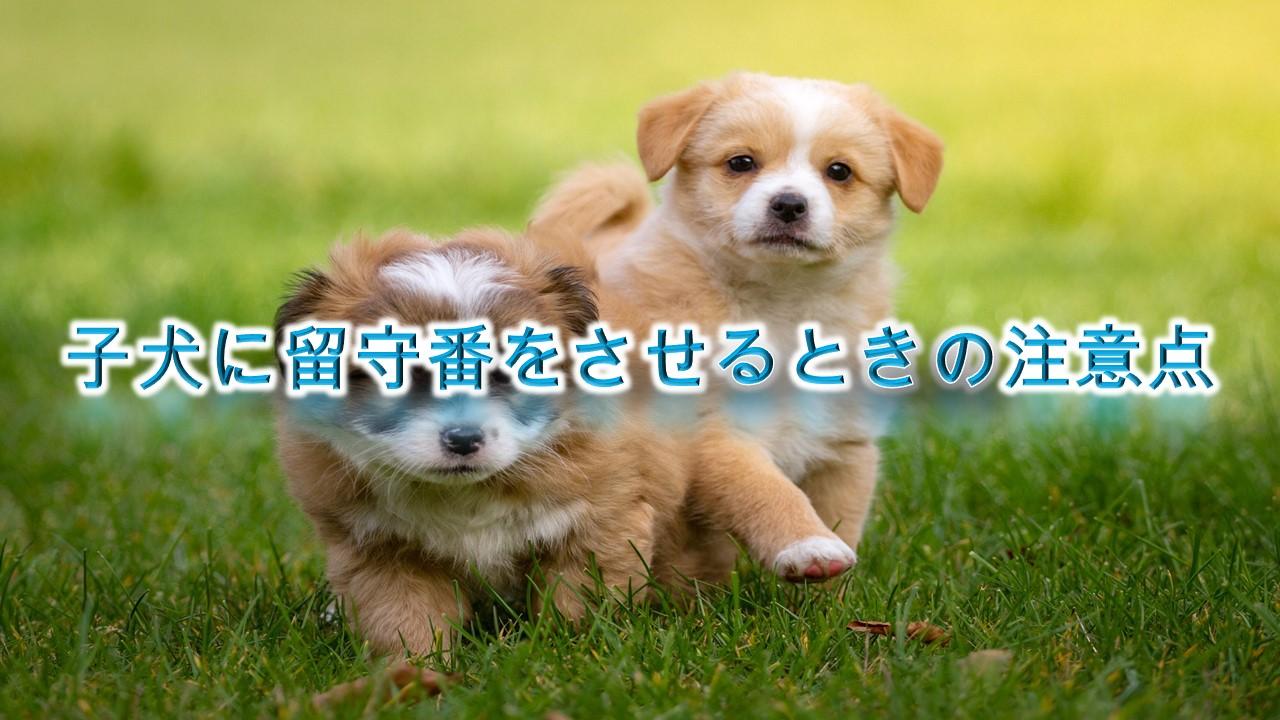 子犬にお留守番をさせる前にするべき3つの準備とは?【子犬の留守番中の注意点も解説!】
