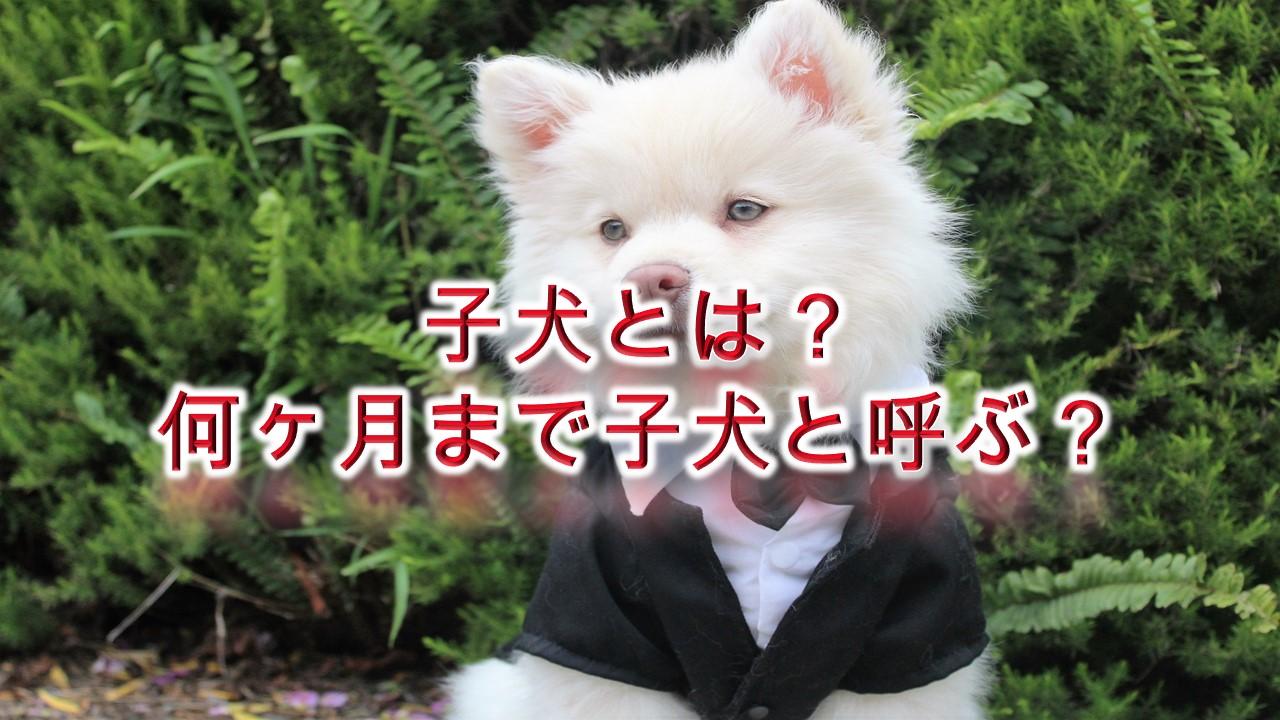 子犬とは?何ヶ月まで子犬と呼ぶ?【子犬の定義を徹底的に解説】