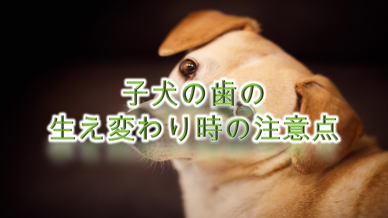 子犬の歯の生え変わり時の注意点