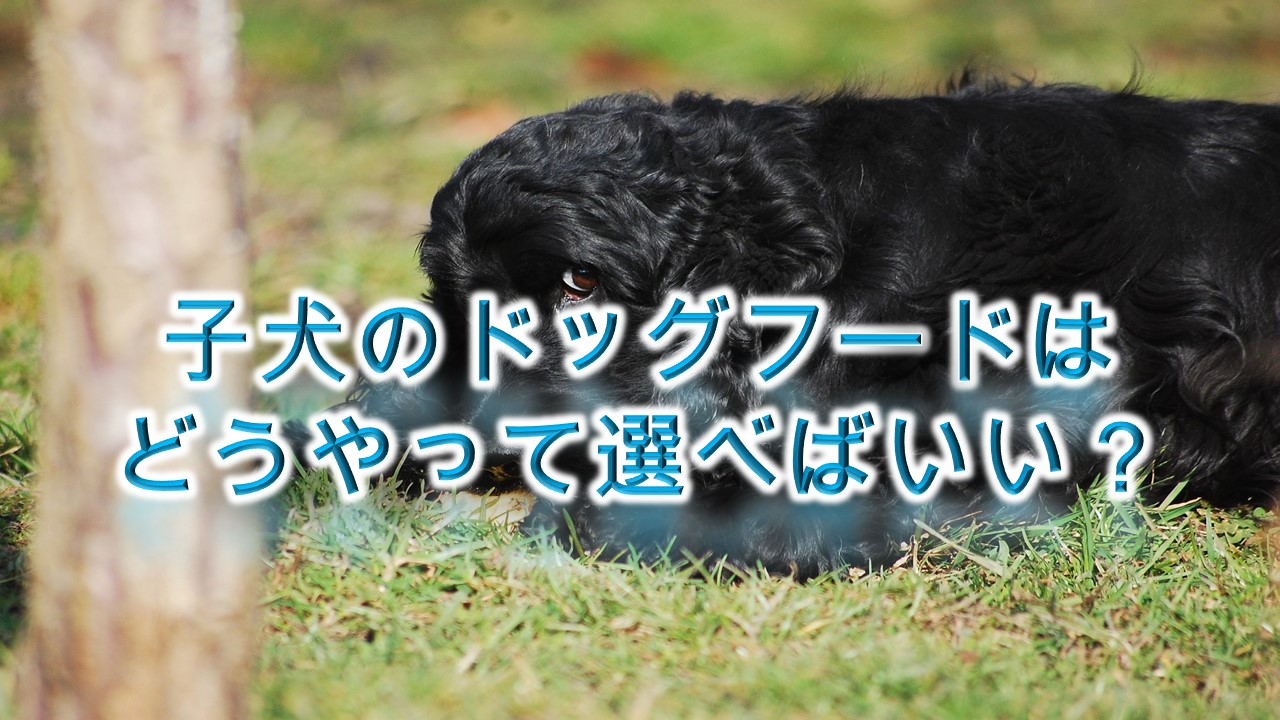 子犬のドッグフードはどうやって選べばいい?【子犬のドッグフードの選び方のコツ】