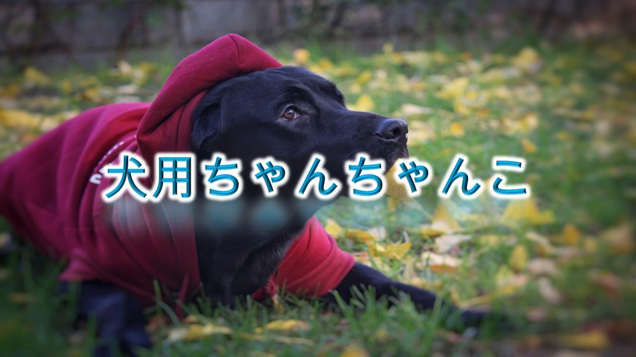 犬用のちゃんちゃんことは?【小型犬におすすめのAmazonの人気商品も紹介】