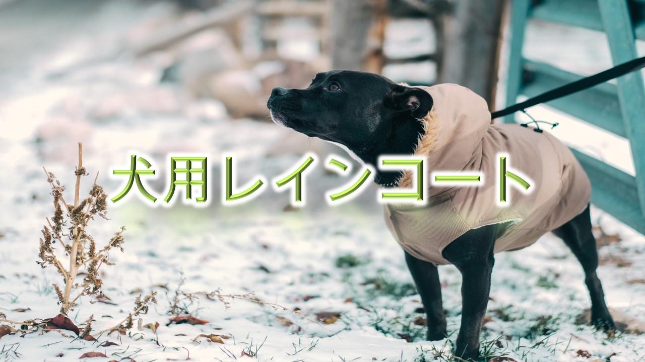 犬用レインコートとは?【小型犬におすすめのAmazonの人気商品も紹介】