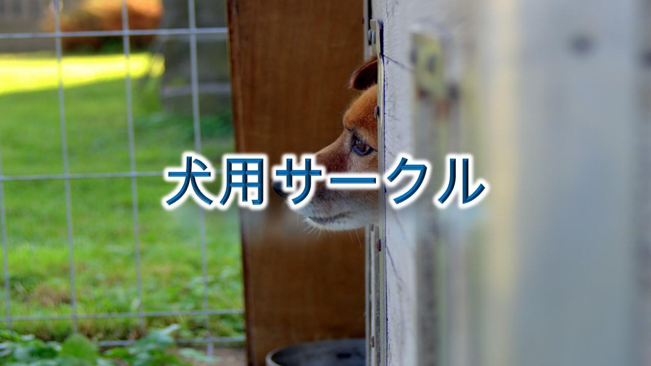 犬用サークルとは?【小型犬におすすめのAmazonの人気商品も紹介】