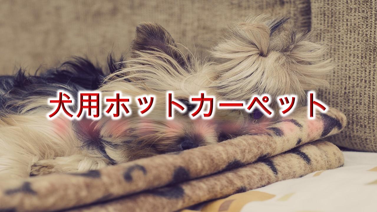子犬も喜ぶ!「犬用ホットカーペット」とは?【使用する際の注意点なども紹介】