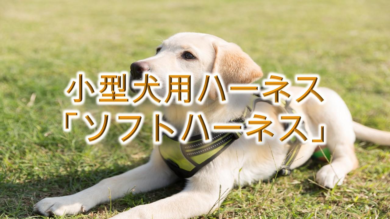 小型犬用ハーネス「ソフトハーネス」とは?【子犬におすすめのAmazonの人気商品も紹介】