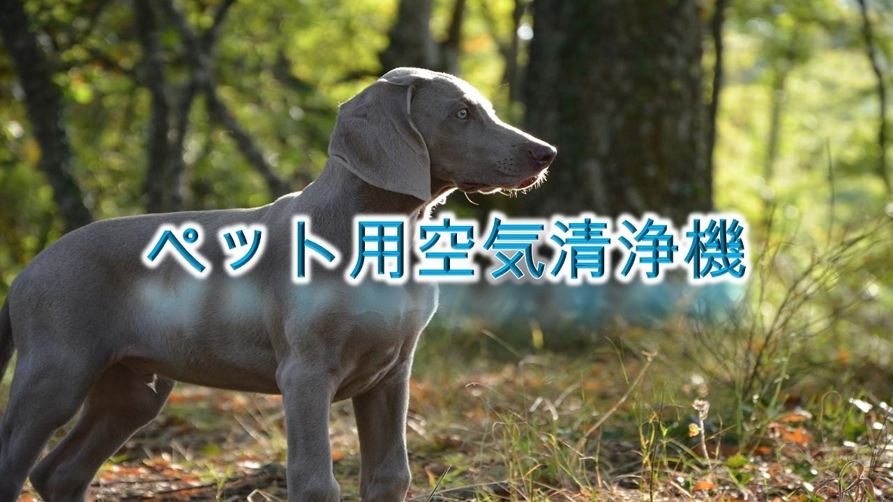 ペット用空気清浄機とは?【犬の臭いは消せる?その効果やおすすめAmazonの人気商品も紹介】