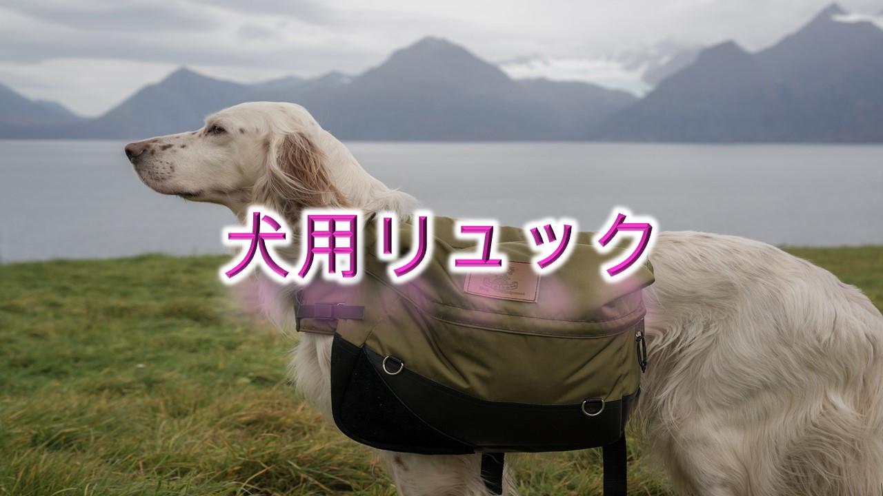 犬用リュックとは?【小型犬におすすめのAmazonの人気商品も紹介】