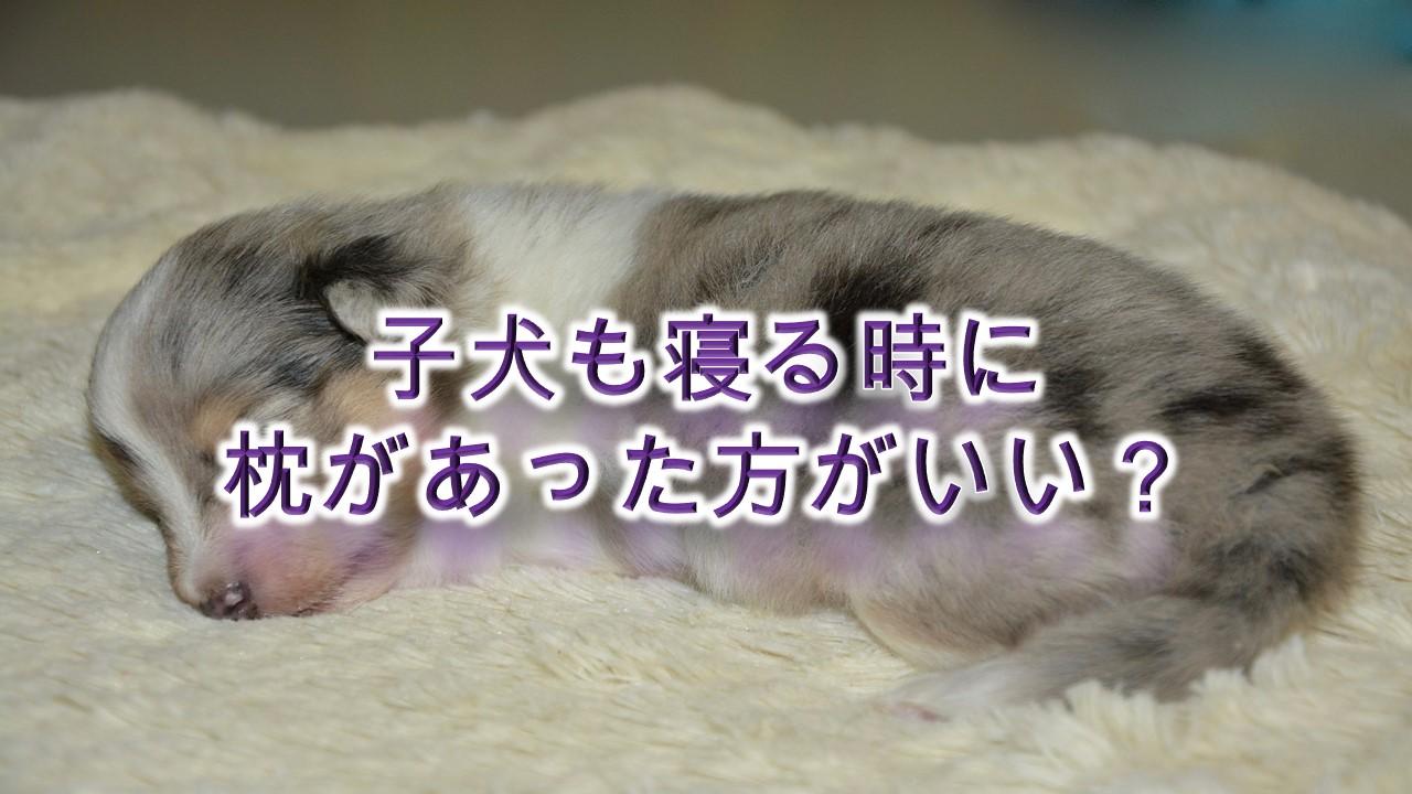 子犬も寝る時に枕があった方がいい?【メリットや子犬におすすめの犬用枕商品も紹介】