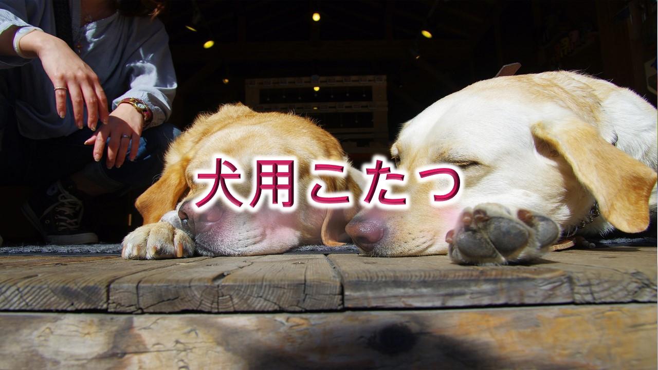 犬用こたつとは何か?【子犬とこたつで温まる時の注意点も解説】
