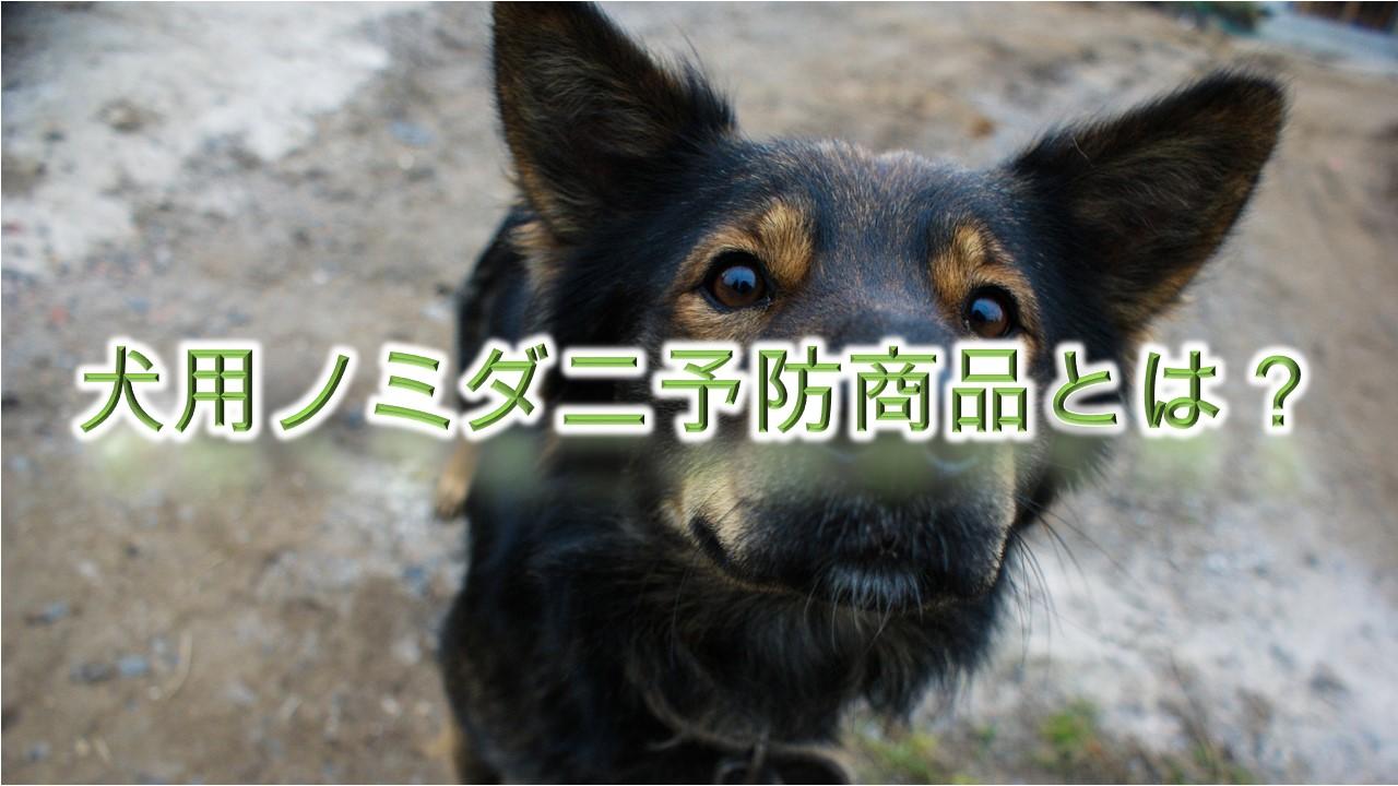 犬用ノミダニ予防商品とは?どんな種類がある?【Amazonで人気の商品も紹介】