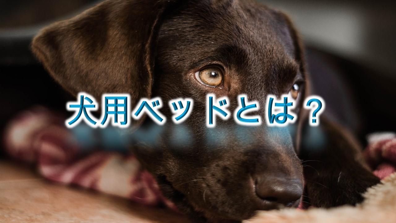 犬用ベッドとは?【夏用と冬用がある?子犬におすすめのおしゃれなAmazon人気商品も紹介】