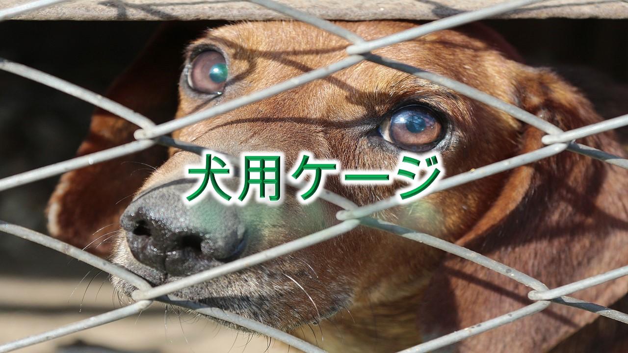 犬用ケージとは何か?その意味や必要な理由【小型犬におすすめのAmazonの人気商品も紹介】