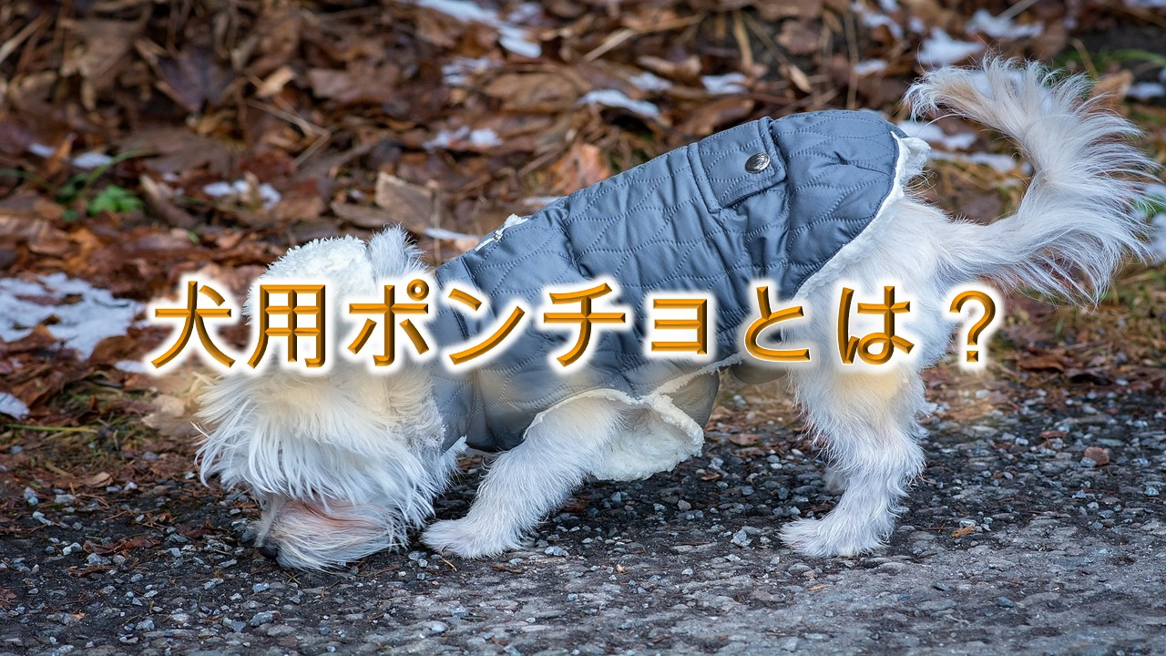 犬用ポンチョとは?【子犬におすすめのAmazonの人気商品も紹介】