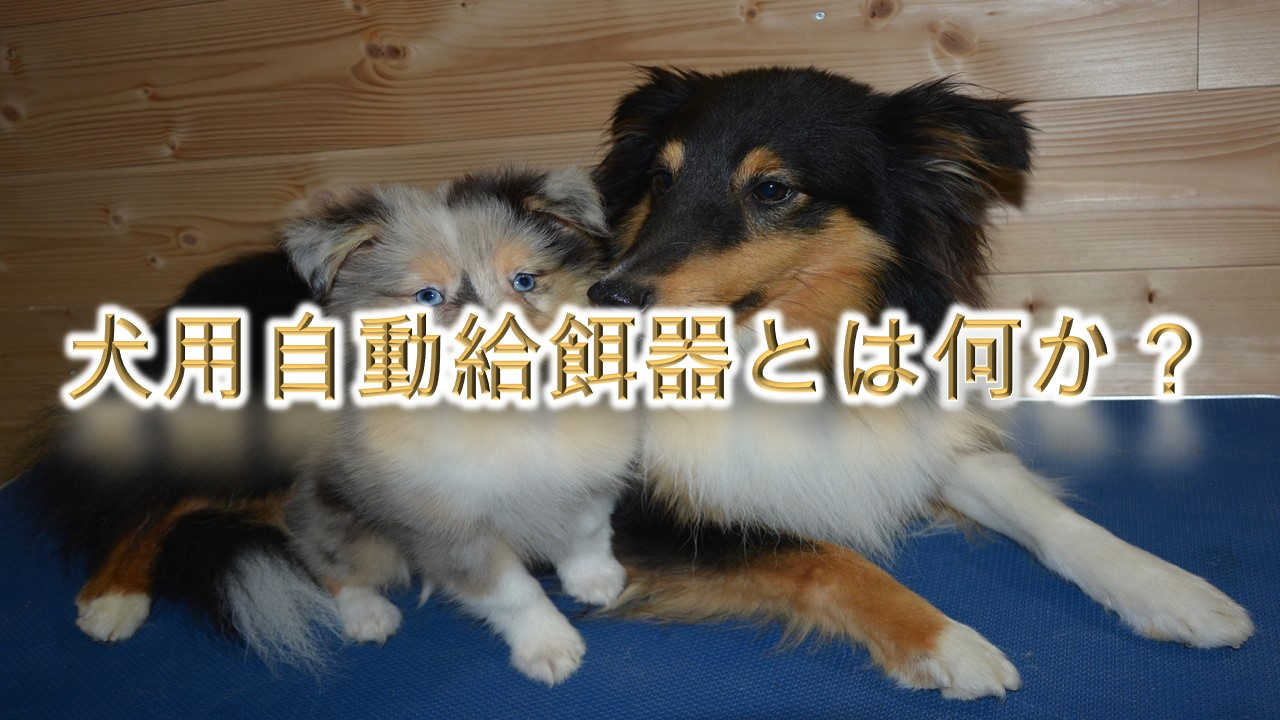 犬用自動給餌器とは何か?【活用方法やメリットなどをわかりやすく解説】