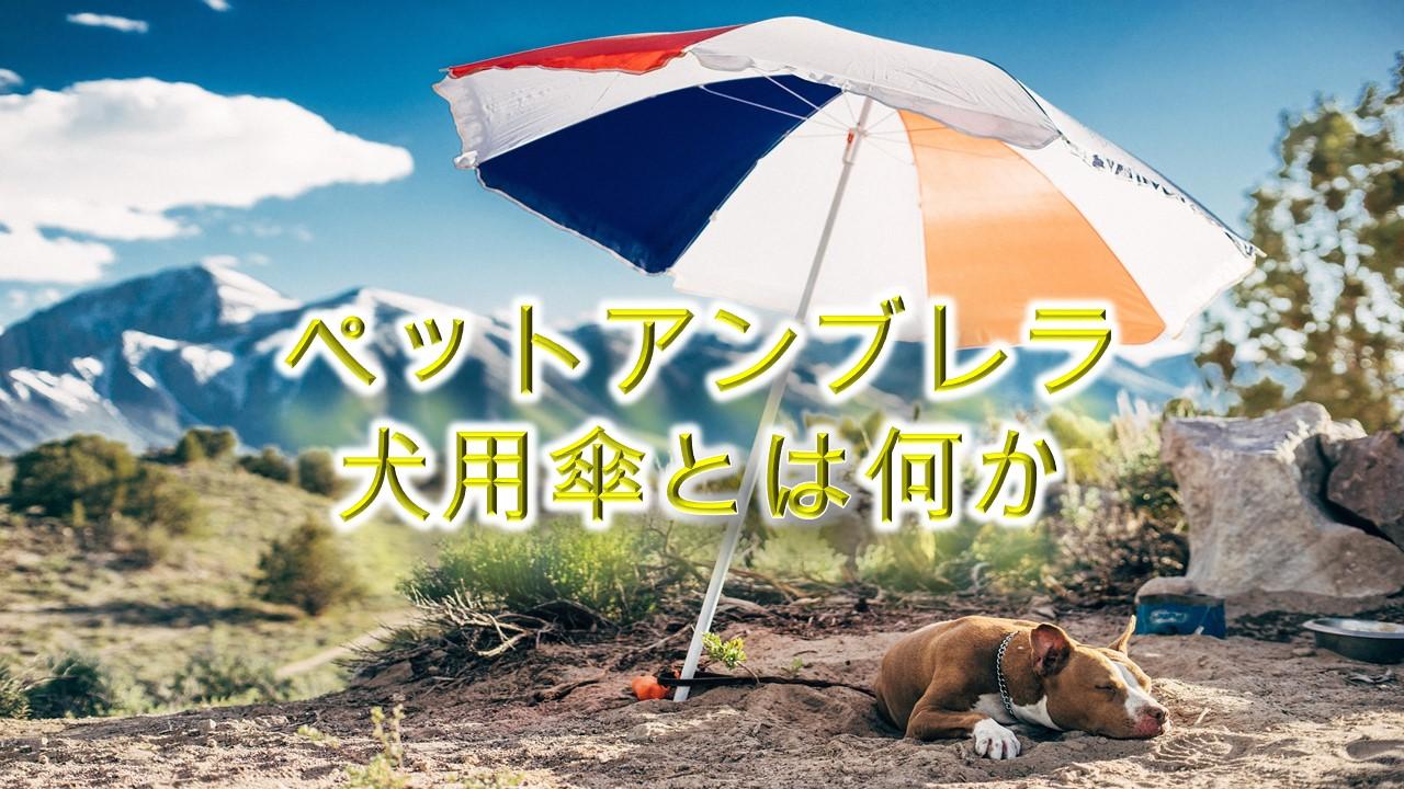 ペットアンブレラ(犬用傘)とは何か【必要?散歩に役立つ??】