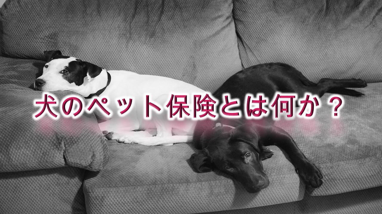 犬のペット保険とは何か?【意味や概要をわかりやすく解説】