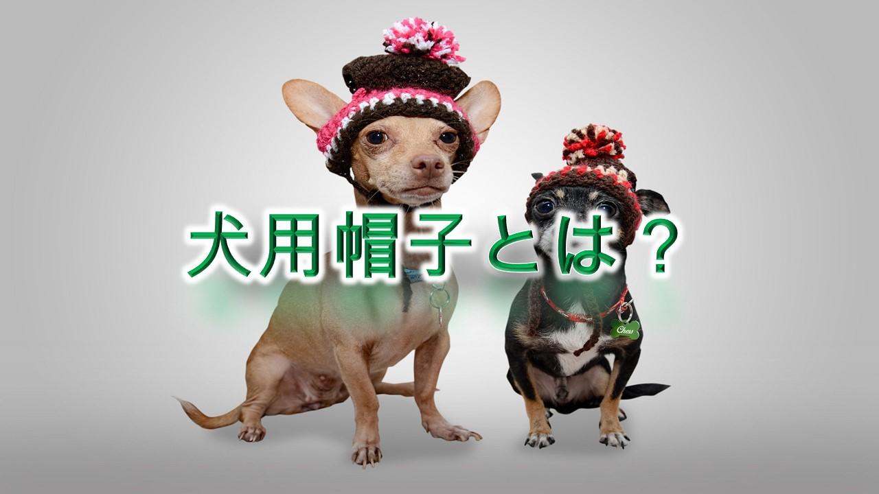 犬用帽子とは?【子犬に帽子をかぶせるメリットや人気のAmazon商品を紹介】