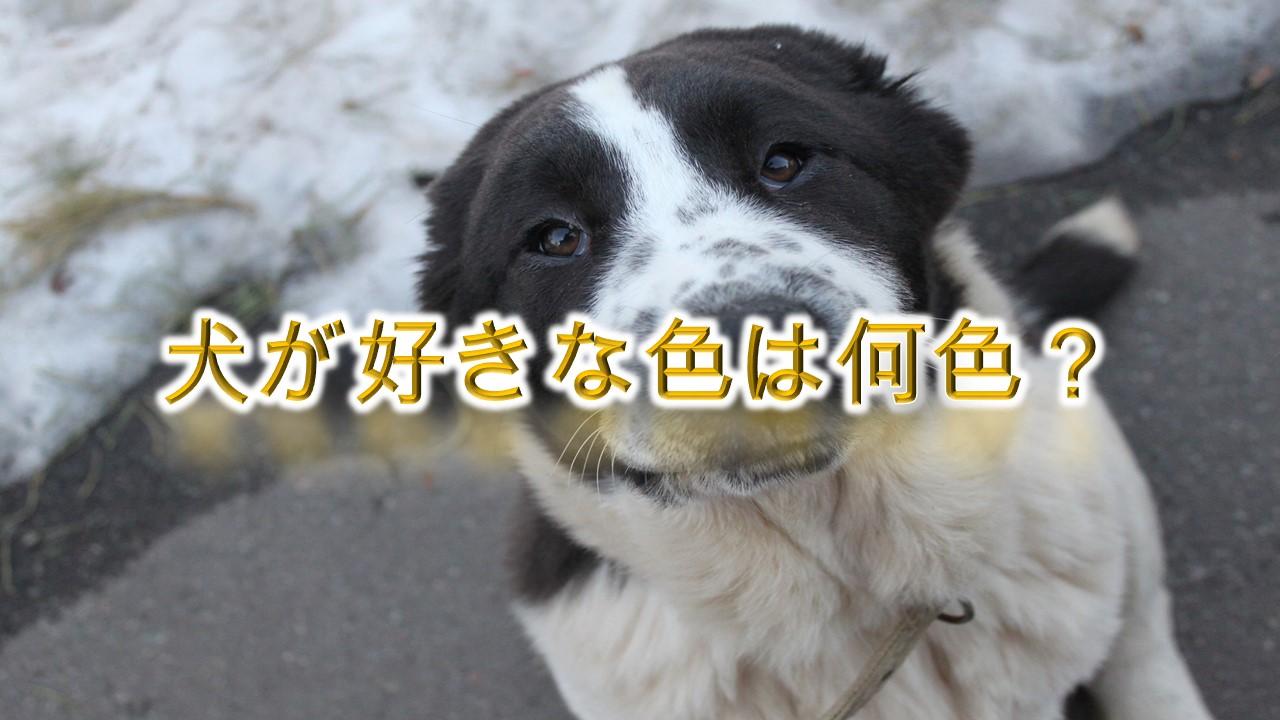 犬が好きな色は何色?【安心する色や見えづらい色も解説】