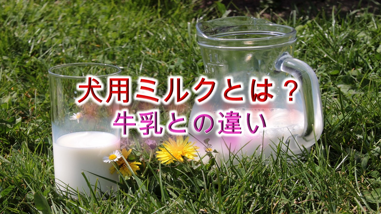 犬用ミルクとは?牛乳との違いは?【小型犬におすすめのAmazon人気商品も紹介】