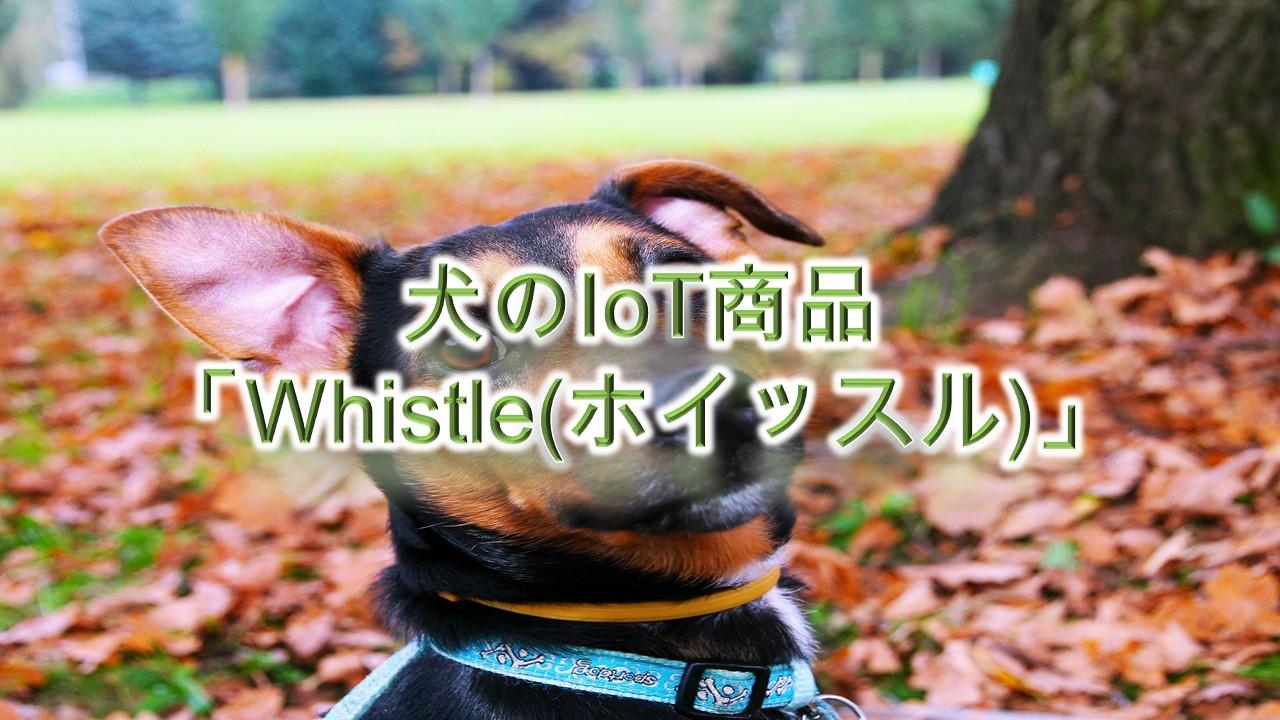 犬のIoT商品「Whistle(ホイッスル)」とは?【犬の首輪型の健康管理ツール】