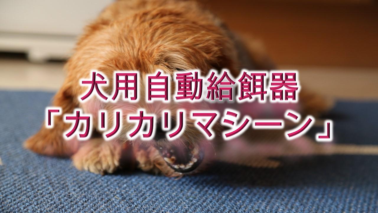 犬用自動給餌器「カリカリマシーン」とは?【値段は?Amazonでも購入できる?】