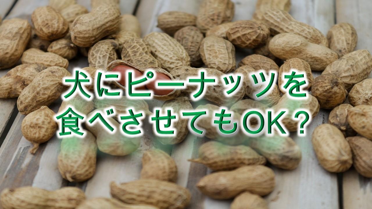 犬にピーナッツ(落花生)を食べさせてもOK?【注意点も解説】