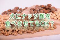 犬にナッツ類を食べさせてもOK?【安全なナッツ類、危険なナッツ類も紹介】