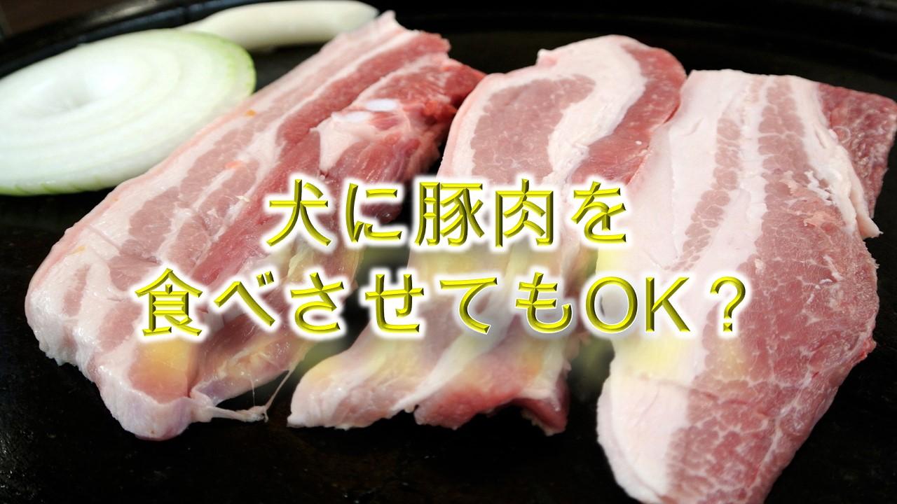 犬が豚肉を食べると危険?【犬に豚肉を与えるメリットや注意点も解説】