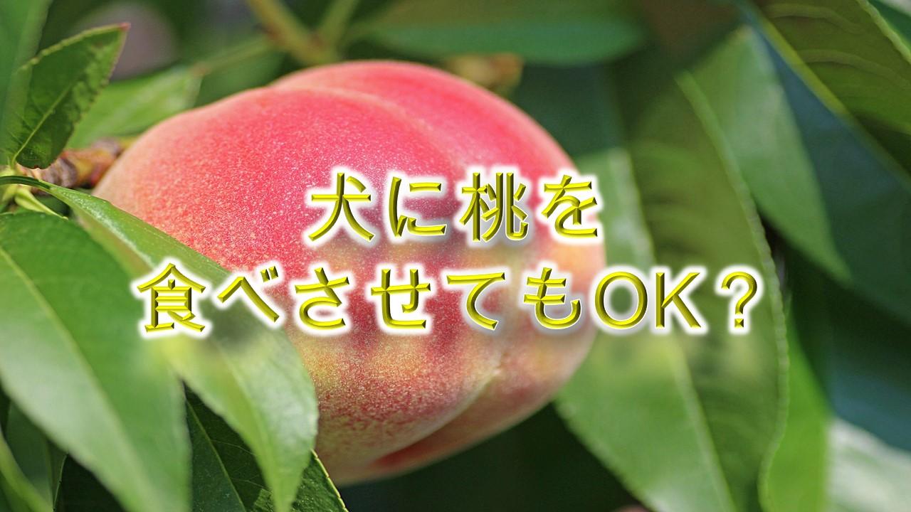 犬に桃を食べさせてもOK?【適正量や注意点も解説】